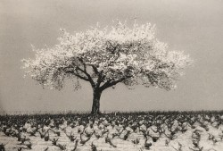 Infrared photography. Print made by the artist 26,5 x 40 cm Limited edition of 8