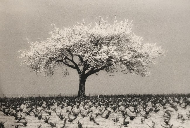 1987 Infrared photography. Print made by the artist 26,5 x 40 cm Limited edition of 8