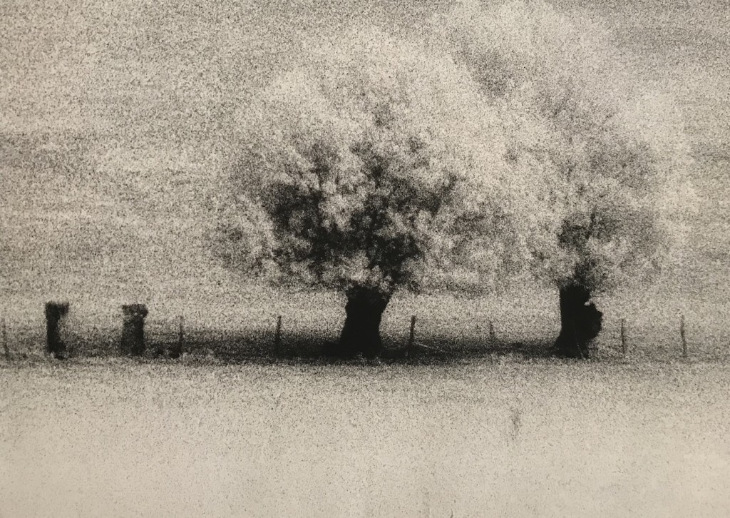 1987 Infrared photography. Print made by the artist 30,5 x 40 cm Limited edition of 8