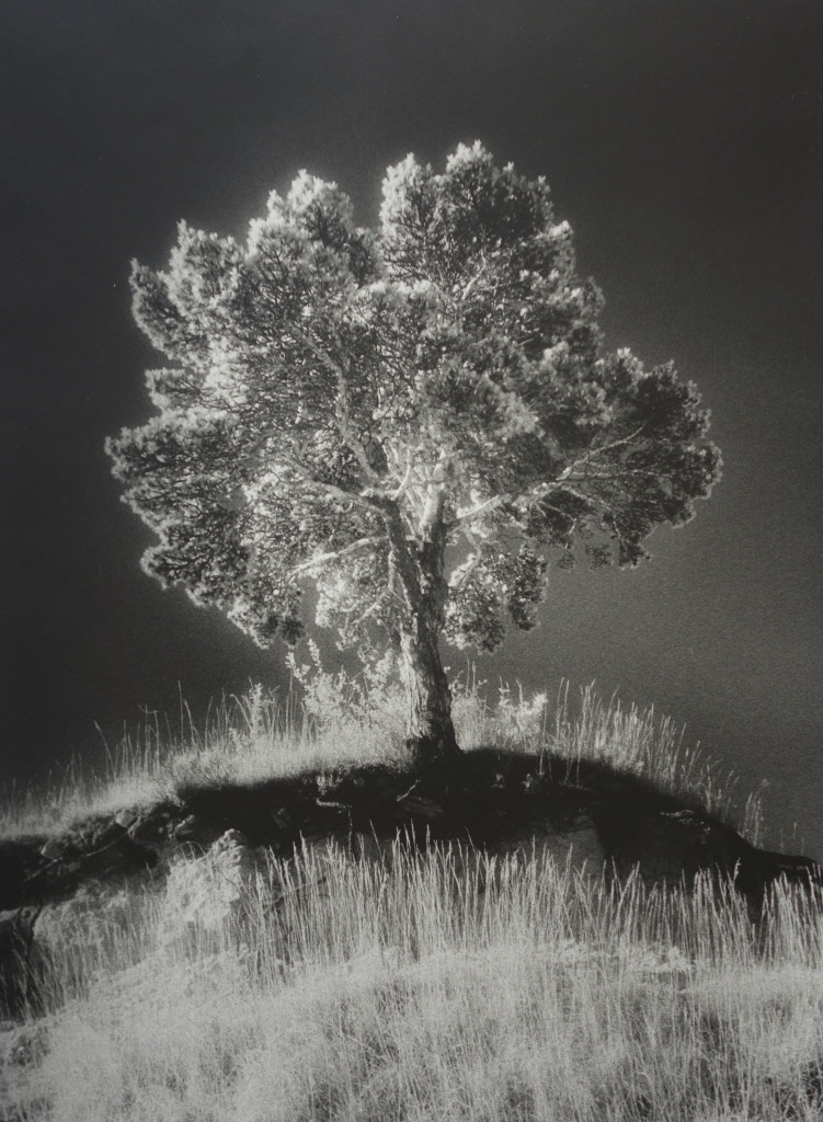 1993 Infrared photography. Print on paper made by the artist 40 x 30,5 cm Limited edition of 8
